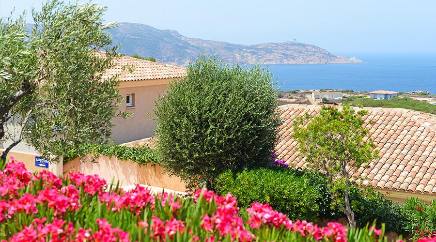 France - Corse - Calvi - Calvi Résidence